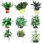 Buy Online Plants