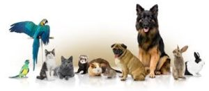 types of Pets